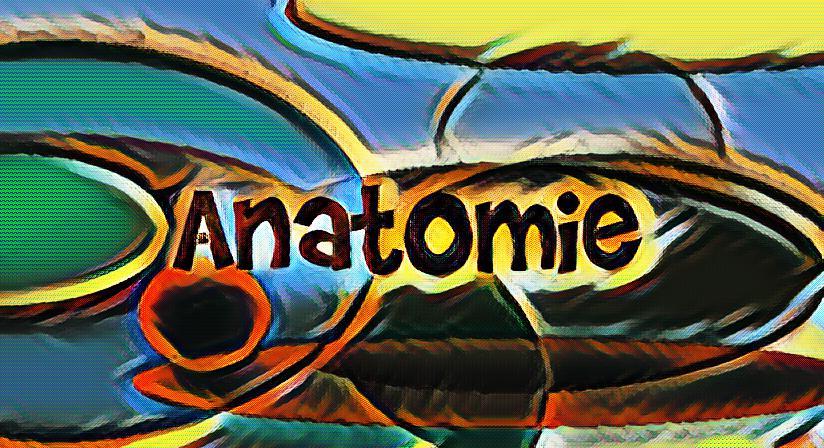 Was ist Anatomie?